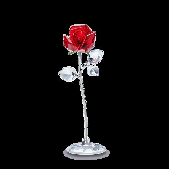 Flower Dreams -  الوردة الحمراء