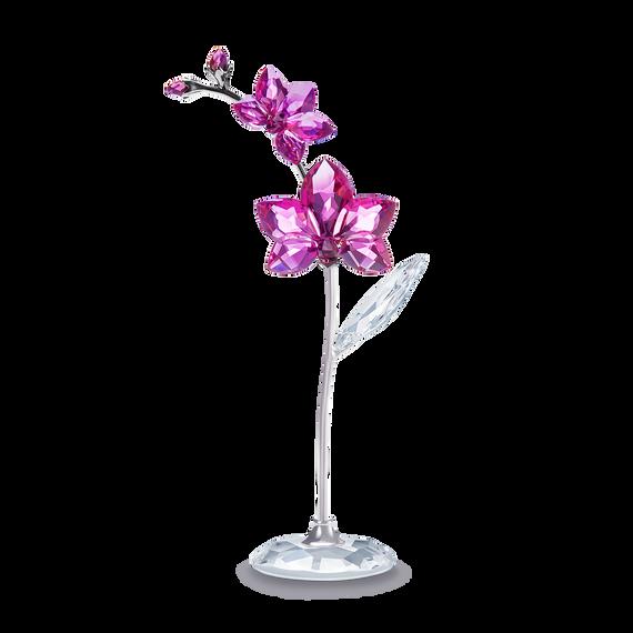 Flower Dreams - زهرة الأوركيد